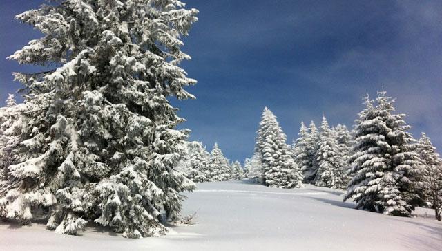 Winterwetter auf search.ch